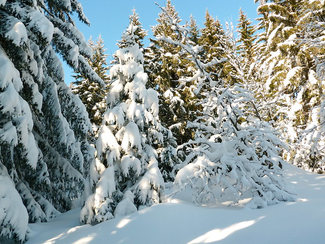 A beautiful Samoëns 1600 winter scene