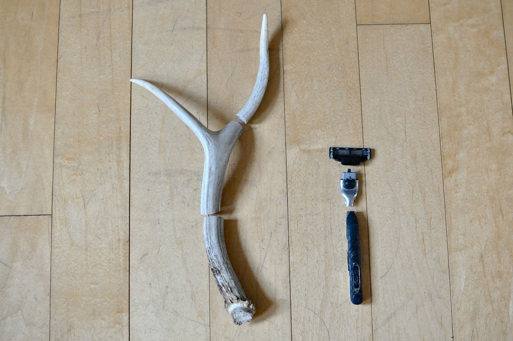 Search results for how to do a razor cut on yourself for Deer antler craft ideas