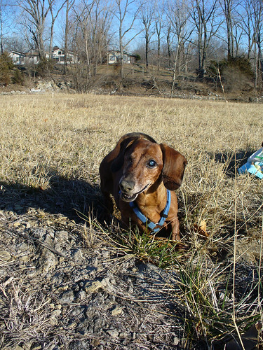 2012-01-10 - Ralphie Digging - 0005
