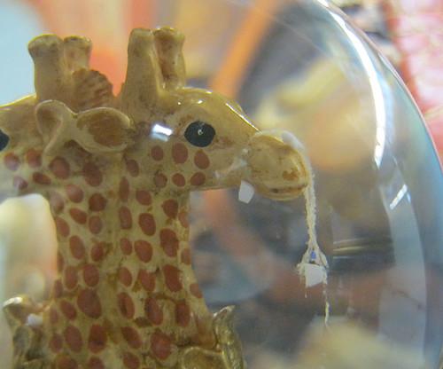 9-17-11GWCompGiraffe1