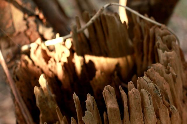 wood moment
