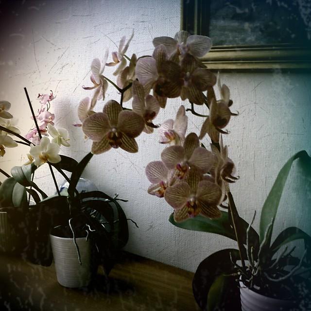 blommor hemma hos iris
