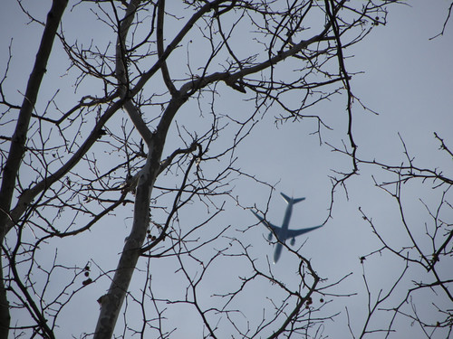 tree and plane