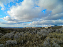 Sagebrush and Clouds