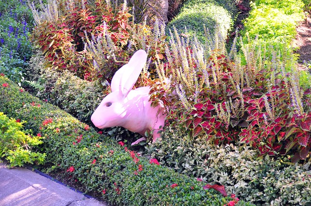 Bunny in the garden, Royal Floral, Chiang Mai