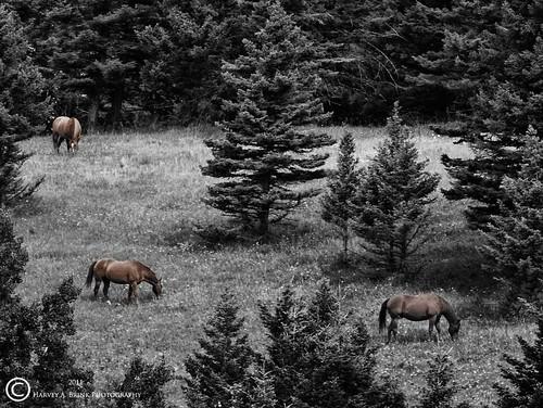0765 Three Horses