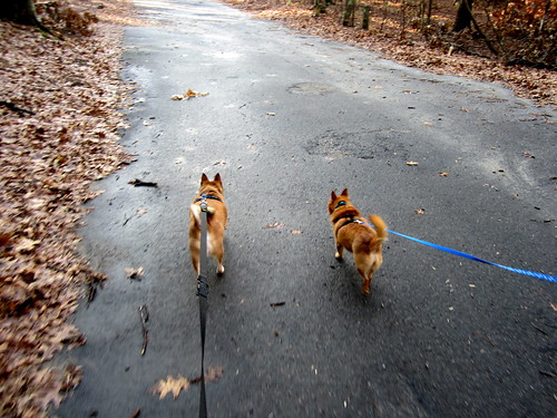 Simon and Rudy's first walk in the forest!