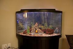 fish-tank-aquarium-custom-installed-bradenton-sarasota-florida-7