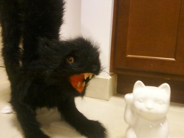 Hello cat eat you cat