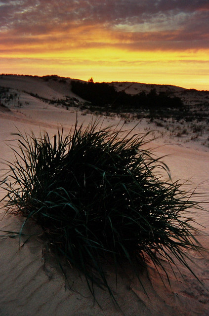 From the Archives - Jockey's Ridge