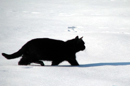 winter snow cat blackcat garden botanical poland polska botanic kraków cracow zima kot śnieg czarnykot ogród krakoff botaniczny