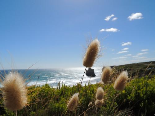Image shot using a COOLPIX P510
