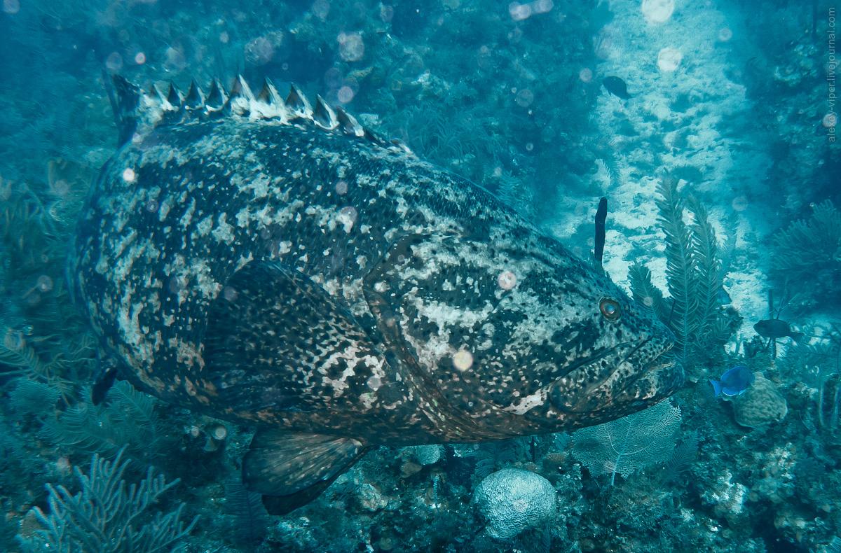 2012.01.12-2012.01.26_dive_safari_[cuba]-diving-012