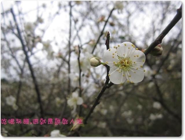 IMG_438 (13)