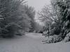 neve nel parco