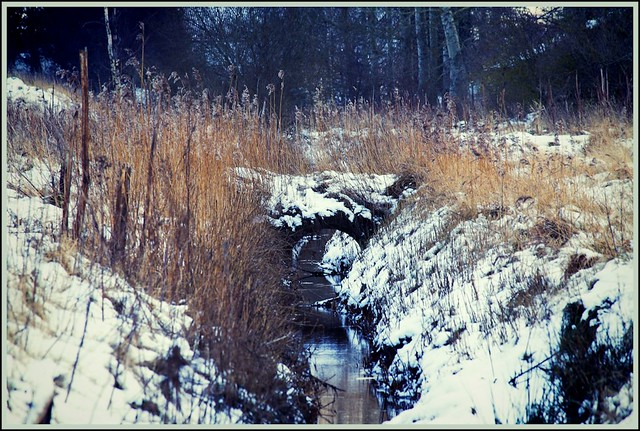 Winter by the stream