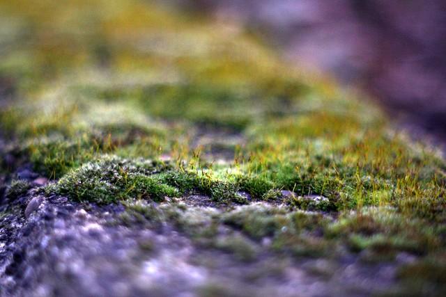 moss, o'bryant square