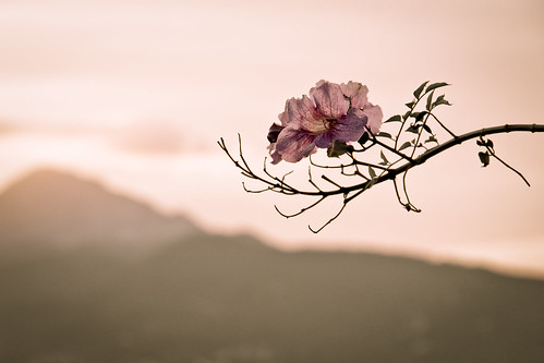sky españa plant flower planta canon landscape hojas spain europa flor paisaje cielo leafs rama ceuta 60d parquedesanamaro