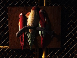 THREE BIRDS ON A FENCE