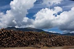 Recursos forestales de Sierra Bermeja