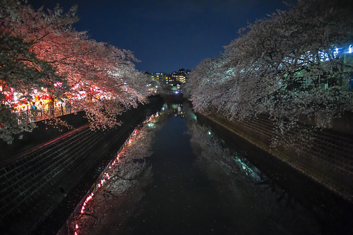 japan night spring clear april 日本 sakura cherryblossoms nightview yokohama crazyshin 横浜 2014 yozakura 夜桜 神奈川県 横浜市 露店 大岡川 afsnikkor2470mmf28ged nikond4s 20140407ds14804 goingtoseecherryblossomsatnight 13715136464 201602gettyuploadesp