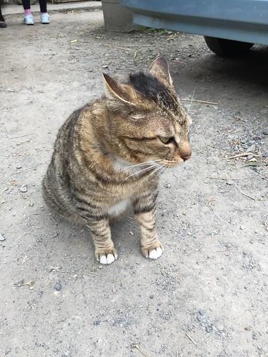 実家のネコちゃん