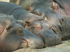 Komerční prezentace:Zoo Praha – 4. nejlepší zoo na světě