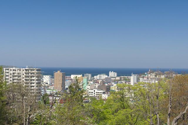 20160508小樽公園の桜_02