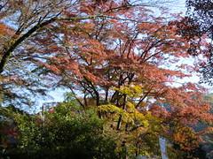 高尾山20111124-011
