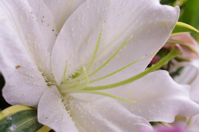 da 35 f2.8 花朵+人向*1