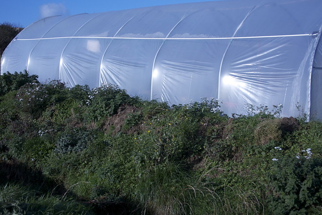 Hugelmound and polytunnel