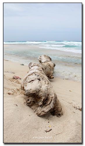 aruba driftwood seroecolorado
