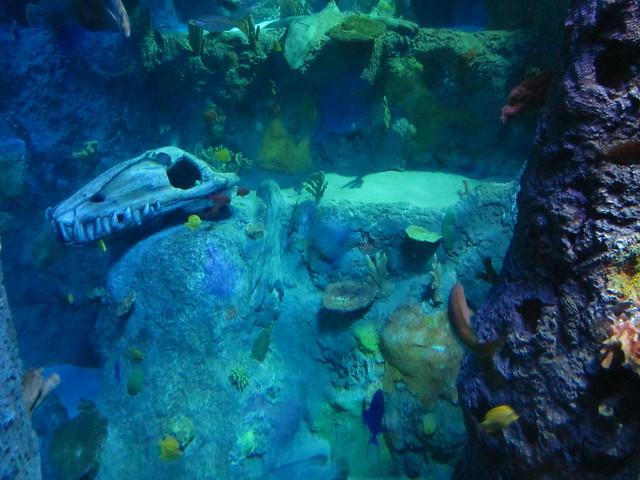 Sea Life Grapevine Aquarium | Explore agroffman's photos ...