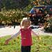 fall_leaves_20111106_21746