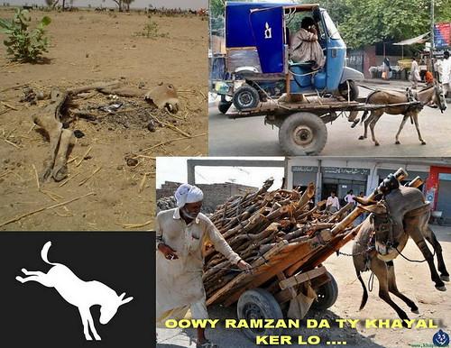 Zoos and Wildlife Breeding Centers of Pakistan