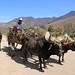 Yunta jalando una carreta - cart with oxen; camino a los pueblos