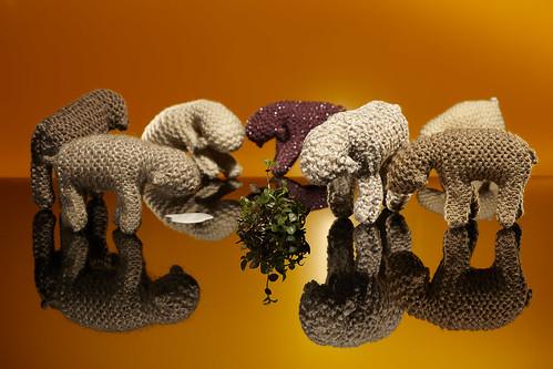 Sheep2011 0500