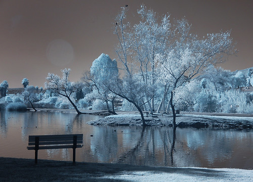 trees water niceshot shapes highcontrast foliage infrared southerncalifornia sunflare santee santeelakes platinumheartaward