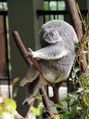 Australia Zoo Jan 2011