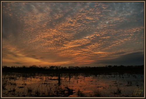 park sunset reflection texture nature clouds pond texas houston swamp wanam3 elfrancoleepark