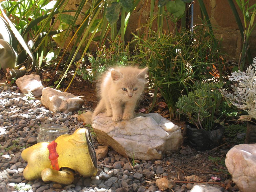 Stray kitten standing on the rock