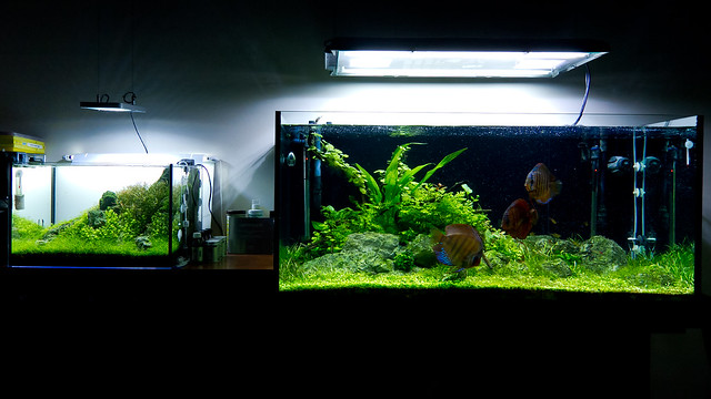 60L and 350L Aquariums