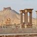 Palmyra 34 by Craig !