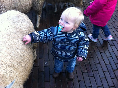 Caspian and the sheep