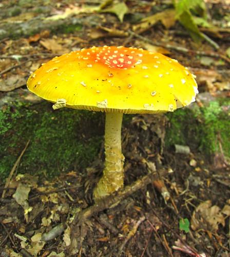 crazy bright mushroom