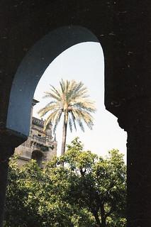 seville palm