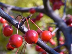日, 2010-11-07 13:41 - New York Botanical Garden (Bronx) ブロンクスの NY植物園