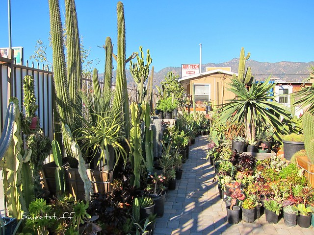 California Cactus Center