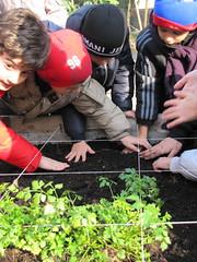 Ricominciamo a coltivare nelle scuole 62