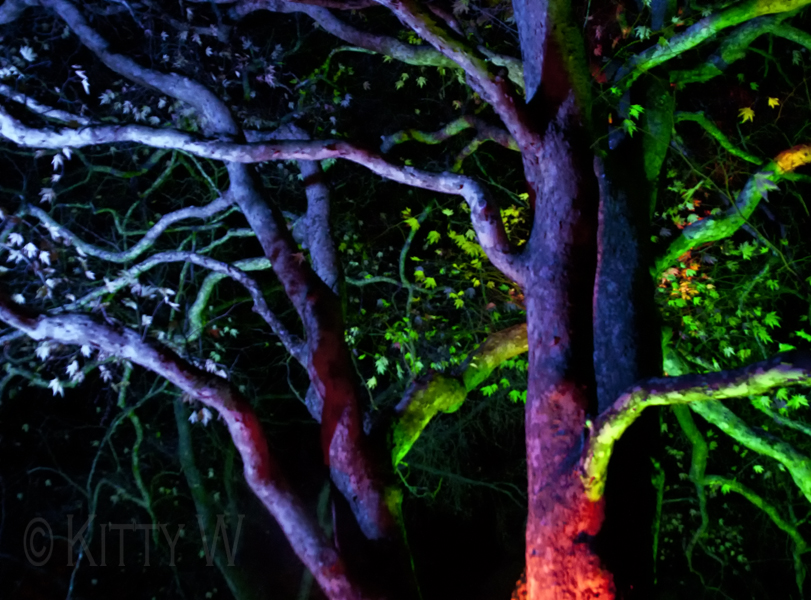 Enchanted Trees